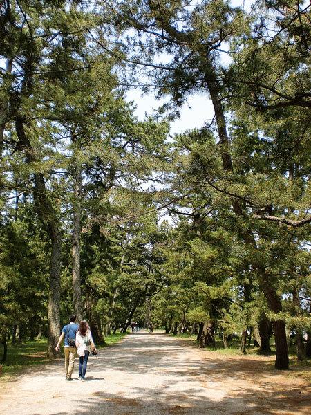 天橋立公園・松並木