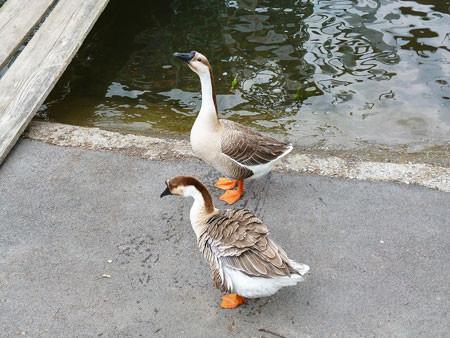 五桂池で鳥たちに餌やり
