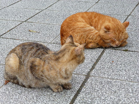 おはらい町の猫
