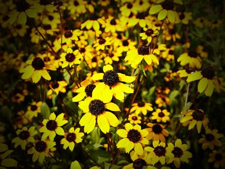徳島県三好市,お墓参り,墓地に咲くお花の写真